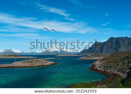 White seagull over sea near norwegian island Skrova - stock photo