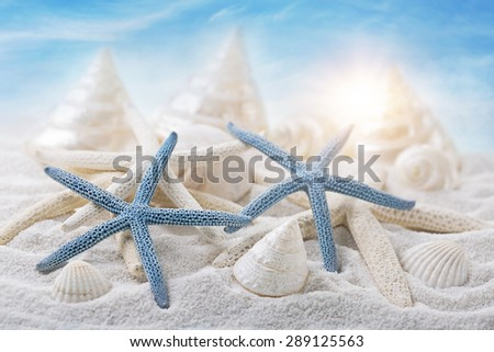 White seashells on sandy beach - stock photo