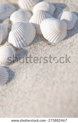 White seashells on the sand - stock photo