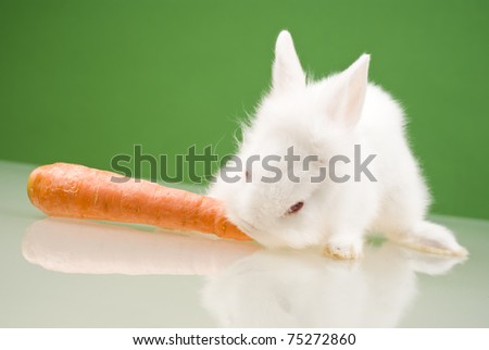 White small rabbit eating a carrot - stock photo
