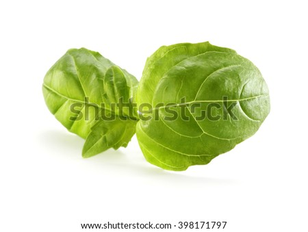 white space and green basil leaves  - stock photo