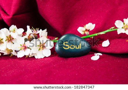 white spring blossoming flower and lava stone background - stock photo