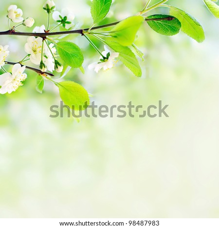 white spring flowers on a tree branch over green bokeh background close-up shallow DOF - stock photo