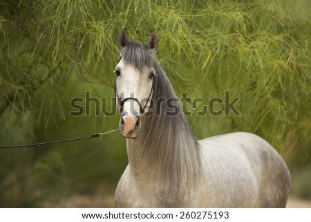 White Stallion In Portrait - stock photo