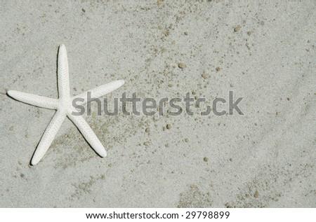 White starfish / Sea Star on sand - stock photo