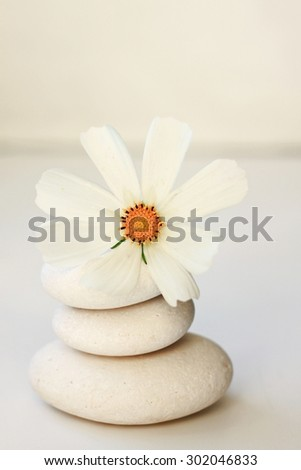 white stones flower peaceful spa background soft focus creamy calm tones beauty relaxing  - stock photo