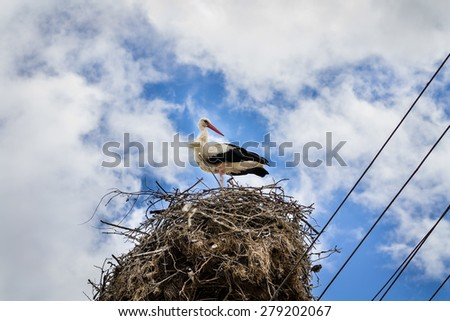 White stork in his nest full of sparrows on cloudy blue sky closeup - stock photo