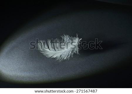 white swan feather isolated on black background   - stock photo