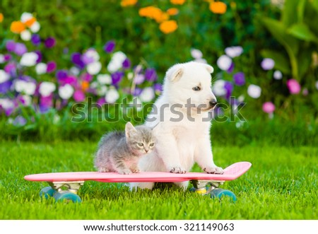 White Swiss Shepherd`s puppy and tabby kitten on skateboard - stock photo
