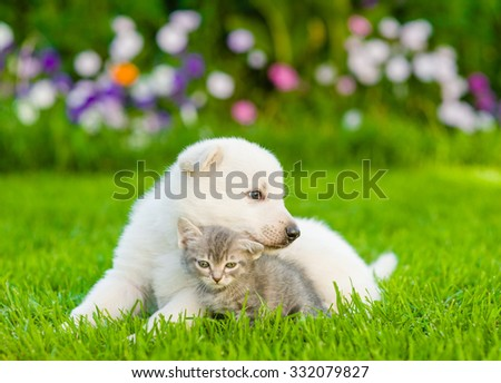 White Swiss Shepherd`s puppy hugging kitten on green grass - stock photo