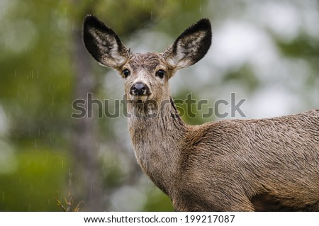 White-tailed deer in a forest clearing in spring - stock photo