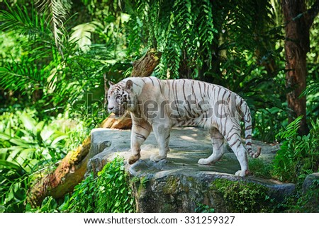 White tiger in green tropical forest jungle - stock photo