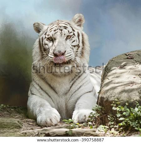 White Tiger Reposing Near a Rock - stock photo