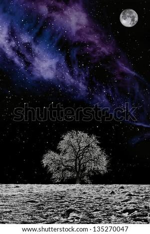 White Tree - stock photo