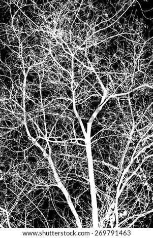 white tree branches on a black background - stock photo