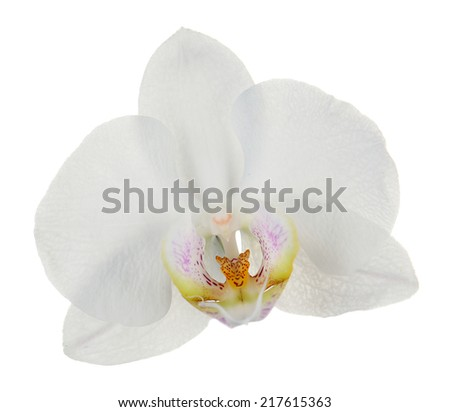 White tropical orchid flower isolated on white - stock photo