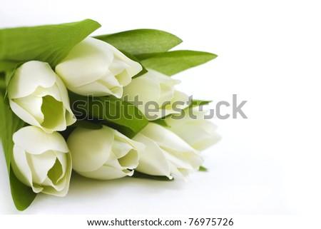 White tulips closeup - stock photo