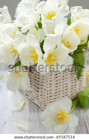 white tulips in a basket on white background - stock photo