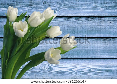 White tulips over the blue wooden background - stock photo