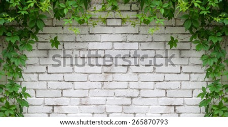 white wall with green - stock photo