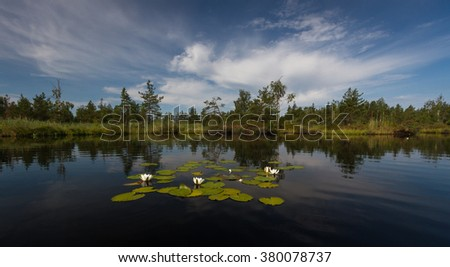 white wate lily in forest lake - stock photo