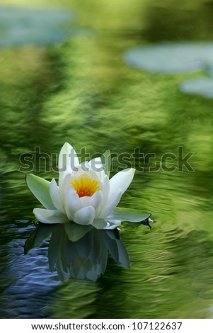 white water lily floating on a wavy water - stock photo