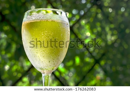 White wine is in the sweaty wineglass. Blurred background of green foliage - stock photo