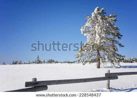 white winter landscape with snow covered tree behind wooden fence and clear blue sky  - stock photo