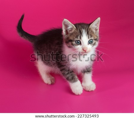 White with striped kitten standing on pink background - stock photo