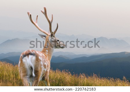 Whitetail Deer standing in autumn mountain - stock photo