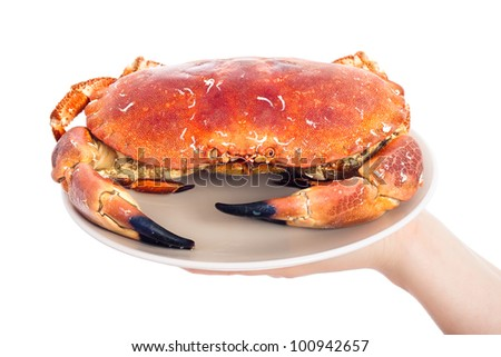 Whole crab on plate, isolated on white background. - stock photo