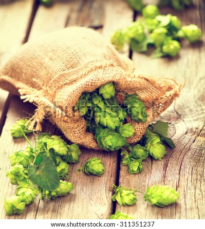 Whole hops in bag on wooden cracked old table. Brewery. Beer ingredients. Beauty fresh-picked hop cones closeup. Sack of hops on vintage background.  Retro style. Alternative medicine. - stock photo