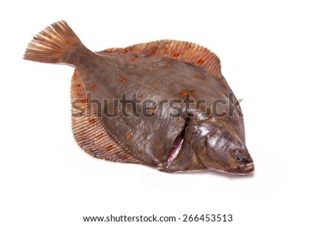 Whole Plaice flatfish isolated on a white studio background. - stock photo