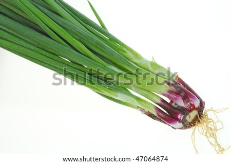 Whole Spring Onion With Roots On White - stock photo