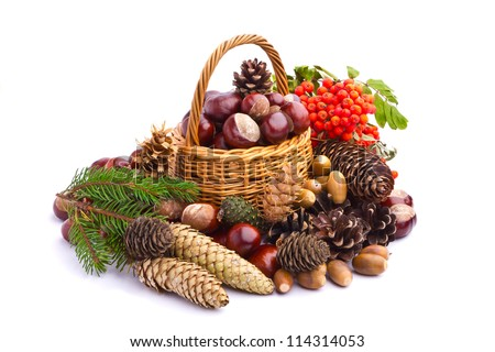 Wicker basket full of autumn acorns, cones and chestnuts - stock photo