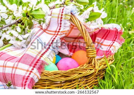 Wicker basket with Easter colored eggs close up under the blossoming cherry branch on a spring green grass - stock photo