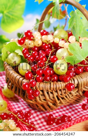 wicker basket with fresh summer fruits -red,white currant and gooseberry on garden table - stock photo