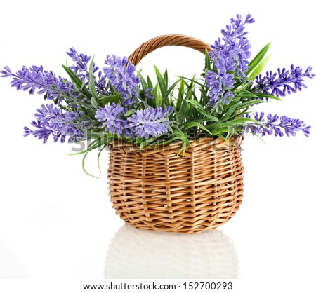 wicker basket with lavender flowers plant bouquet isolated on white background - stock photo