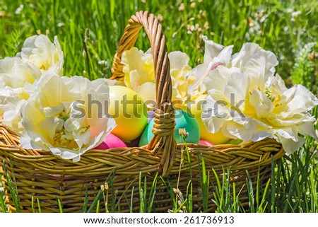 Wicker basket with painted easter eggs and white double tulips close up in the green grass on a sunny spring day - stock photo