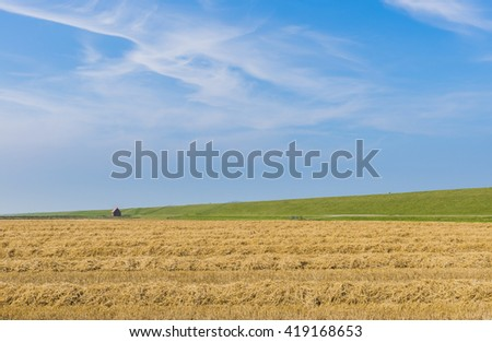 Wide landscape in the province of Groningen with grain field and sheep  on dike. - stock photo