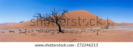 wide panorama of Dune 45 in sossusvlei Namibia, view from the top of a dune, best place in namibia - stock photo