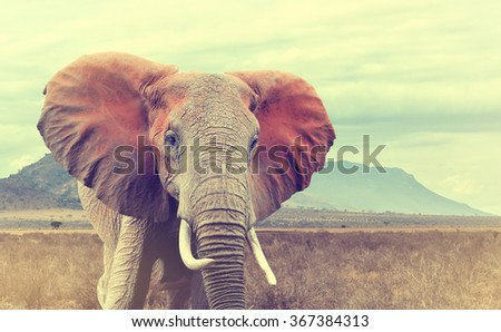 Wild african elephant. Vintage effect. National park of Kenya, Africa - stock photo