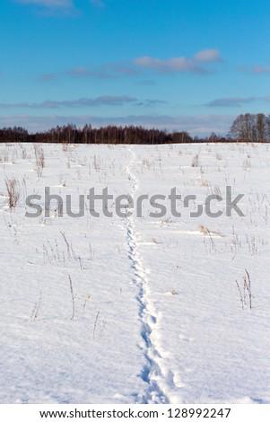 Wild animal footprints in snow. - stock photo