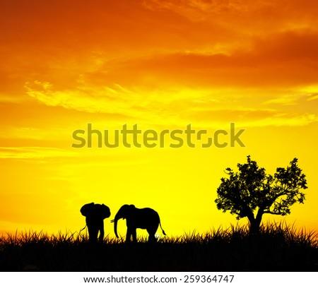 Wild animals in the field - stock photo