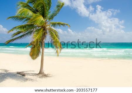 Wild Beach at Tulum  -  Yucatan Mexico - stock photo