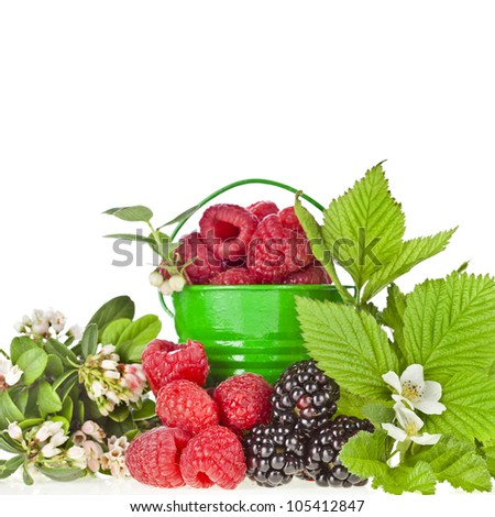 Wild berries with flowering sprigs  isolated on white  background - stock photo
