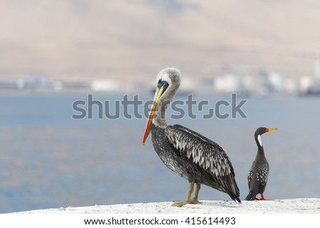 Wild Birds in Chile
