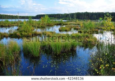 Wild bog. Russian nature - stock photo