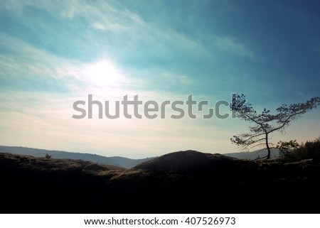Wild bonsai of pine on sandstone rocks. Blue mist in valley below. - stock photo