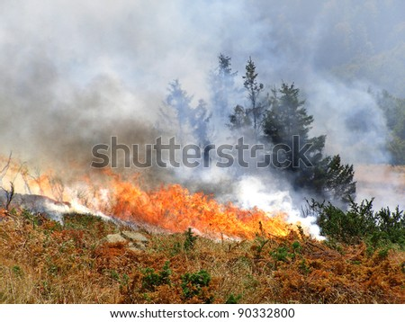 Wild bush vegetation in fire - stock photo